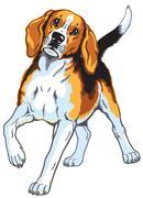Stock Illustration of beagle