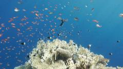 Tropical fishes in Red Sea Stock Footage