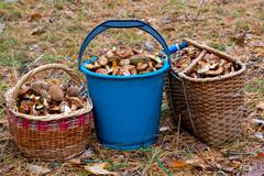 Stock Photo of pail and basket with mushruums