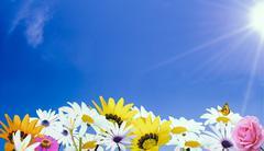 beautiful flowers and bright sun - stock photo