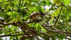 Bird in a tree in Sri Lanka Stock Footage