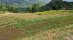 Tilt from a rice terrace in Central Province, Sri lanka Stock Footage