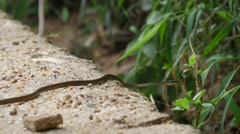 Small snake in Central Province, Sri lanka Stock Footage