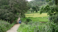 Tuk Tuk passing by between the paddy fields in Central Province, Sri lanka Stock Footage