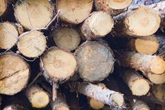 Pile of felled tree trunks Stock Photos