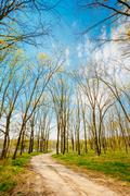 spring season in park. green young grass, trees on blue sky background - stock photo