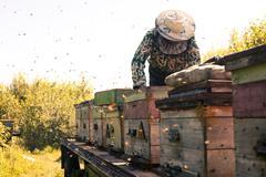 Mari beekeeper working with beehives outdoors Stock Photos