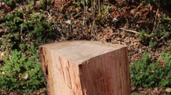 Firewood being hit by a splitting maul Stock Footage
