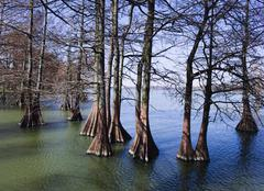 Trees and exposed roots in lake Stock Photos