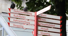 Ultra HD 4K Street Sign Indicator Sightseeing Places Route Arrow Cologne Pigeons - stock footage
