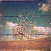 Tumbleweed caught in barbed wire fence in rural landscape Stock Photos