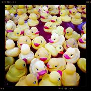 Close up of rubber ducks floating in pool Stock Photos