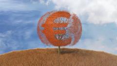 Euro symbol on a tree, falling leaves Arkistovideo