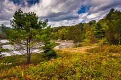 Stock Photo of pine tree at otter cove, in acadia national park, maine.