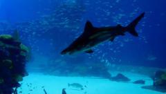Huge aquarium with marine life Stock Footage