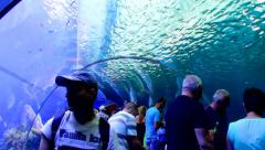 Huge aquarium with marine life and  visitors Stock Footage