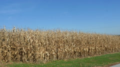 2508 Golden Corn Field with Blue Sky, HD Stock Footage