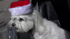 4K Dog Santa Hat Christmas Car Ride Holiday Fun Stock Footage
