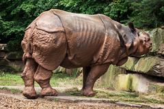 side view of indian rhinoceros (rhinoceros unicornis) - stock photo