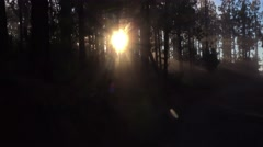 POV. Walking in mountain pine woods on sunset, light rays projecting, Tenerife. Stock Footage
