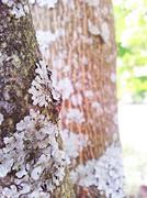 Grey fungi on tree Stock Photos
