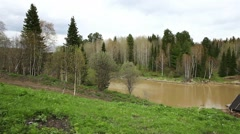 Forest in Siberia Stock Footage