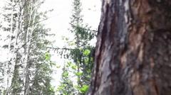 Ringing Cedars of Russia Stock Footage