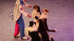 Dog in the circus Stock Footage