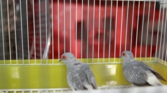 Close-up of a lovely bird in the cage Stock Footage