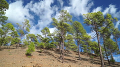 Trees and clouds Stock Footage