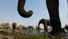 Low angle footage of African Elephants drinking at waterhole - stock footage