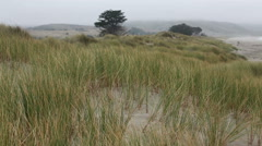 Grass On Northern California Sand Dune 1 Stock Footage