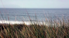 Grass On Northern California Sand Dune 2 Stock Footage
