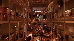 Museum. Exhibition hall with animal skeletons. Soft Light.Time Lapse Stock Footage