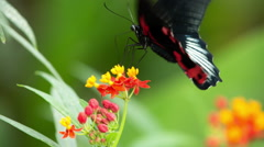 Butterfly hothouse wildlife nature environment plants Stock Footage