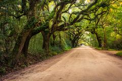 oak trees along the dirt road to botany bay plantation on edisto island, sout - stock photo