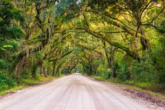 oak trees along the dirt road to botany bay plantation on edisto island, sout - stock photo