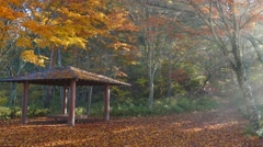 Beautiful maple place with nice light Stock Footage