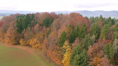 Aerial - Colorful autumn leaves - stock footage