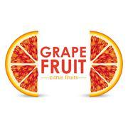 Stock Illustration of grapefruit citrus fruit  over white background vector illustration