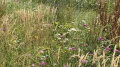 Wildflower mix on sandy soil with blooming grasses and plants Stock Footage