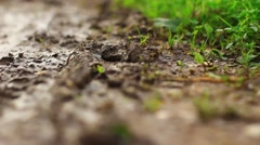 Wet ground on the field Stock Footage
