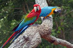 Pair macaw parrots sitting on branch Stock Photos