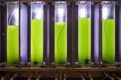 Photobioreactor in lab algae fuel biofuel industry. Stock Photos