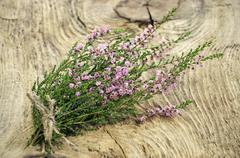 calluna vulgaris (common heather) flowers on wooden surface - stock photo