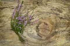 common heather flowers on wooden surface - stock photo