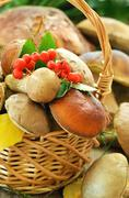 fresh mushrooms in basket, close up view - stock photo