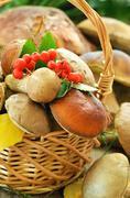 Fresh mushrooms in basket, close up view Stock Photos