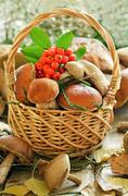 Fresh mushrooms and ashberry branch in basket Stock Photos