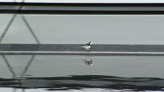 White Wagtail Stock Footage